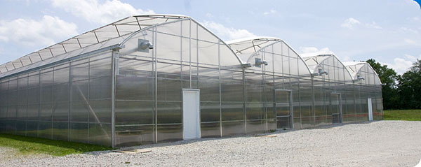 Greenhouses will soon be producing wasabi and other foods